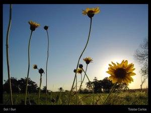 sol_sun
